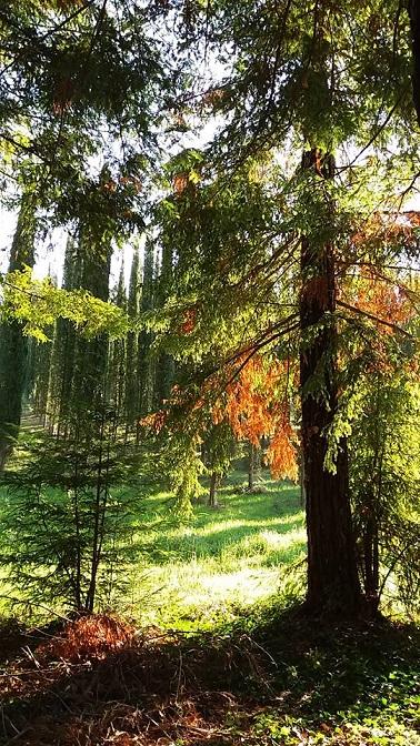 Il bosco segreto della Cellulosa