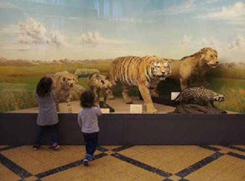 Animali per Gioco - Visita guidata per bambini e ragazzi al Museo Civico di Zoologia di Roma