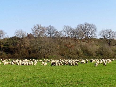 Una giornata con il pastore: trek + degustazione a km 0