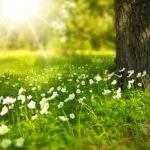 101 nuovi alberi per i centenari
